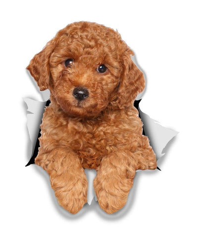 Red Poodle Decals