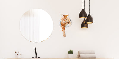 Climbing Ginger Decals