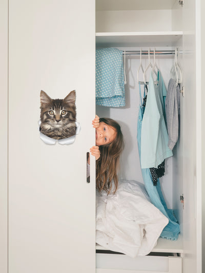 Maine-coon Decals