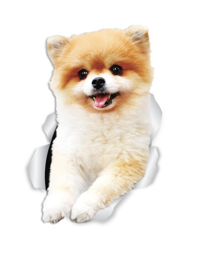 Funny Pomeranian Decals