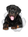 Friendly Rottweiler Decals