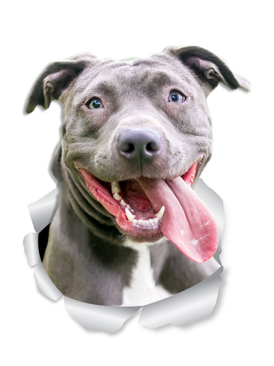 Happy Pit Bull Decals