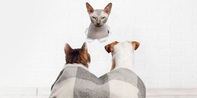 Grumpy Sphynx Cat Decals.