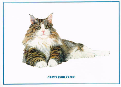 ANM 09 - Norwegian Forest