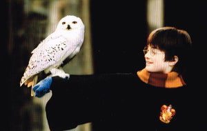 HP 19 - Harry Potter, Hedwig