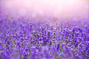 Lavender Fields - Reed Diffuser