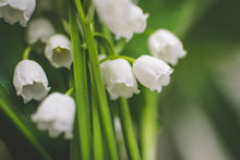 Lilly of the Valley - Candle