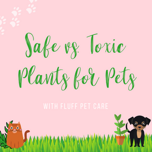 Safe vs. Toxic Plants for Pets