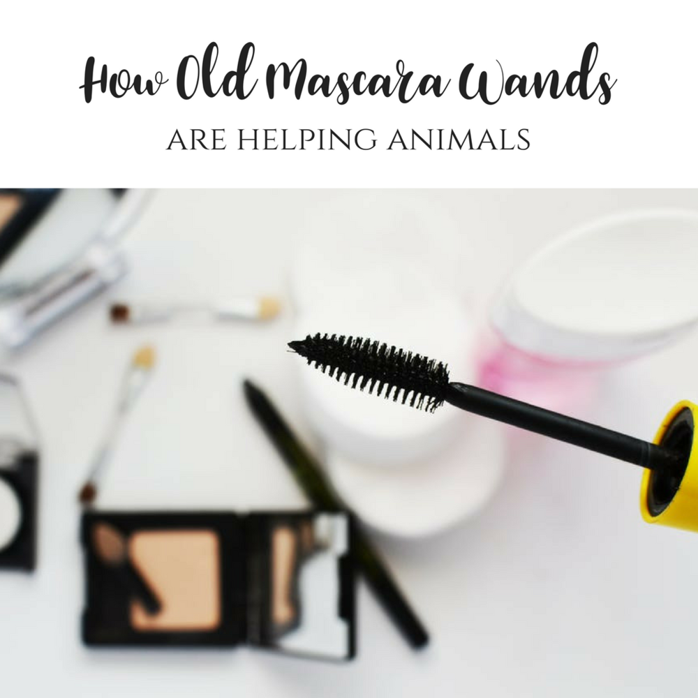 How Old Mascara Wands Are Helping Animals