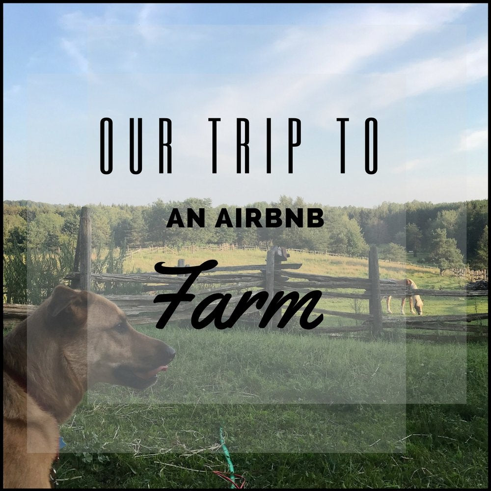 Our Trip to an Airbnb Farm