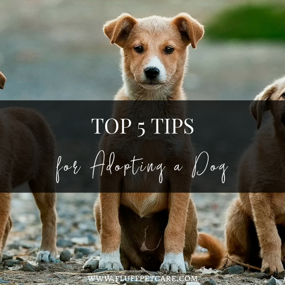 Top 5 Tips for Adopting a Dog