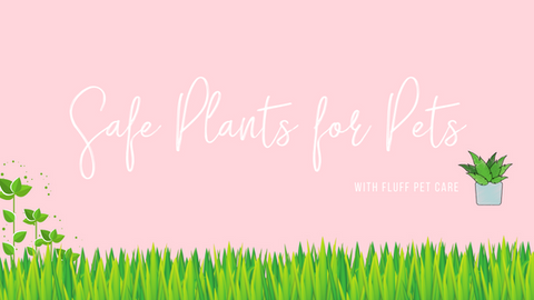 Safe Plants for Pets - Nontoxic Plants for Pets
