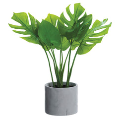 Split Leaf Philodendron - Image via Michael's