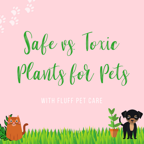 Toxic and Non-toxic Plants for Pets