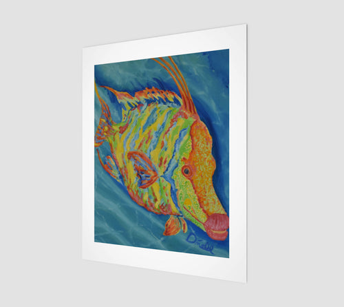 Wild Hogfish Fine Art Print - Museum Quality
