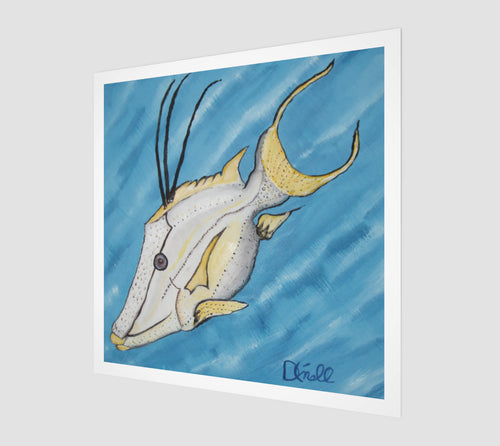 Flash the Hogfish Fine Art Print - Museum Quality