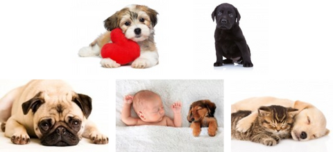 Pets Help Reduce Stress:  manage stress, hormones, and cortisol
