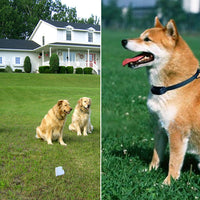 Electronic Pet Dog Fencing System (300 Meters) - Beewik-Shop.com