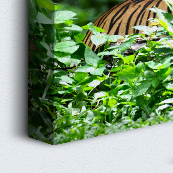 Tiger In The Forest 5 Panel Canvas Print Wall Art Canvas Print Got It Here