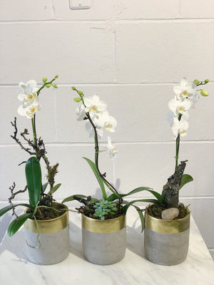 Gray Marble Single Orchid