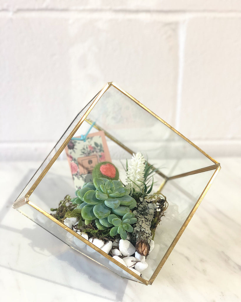 Succulents Placement with Gold Edge Glass