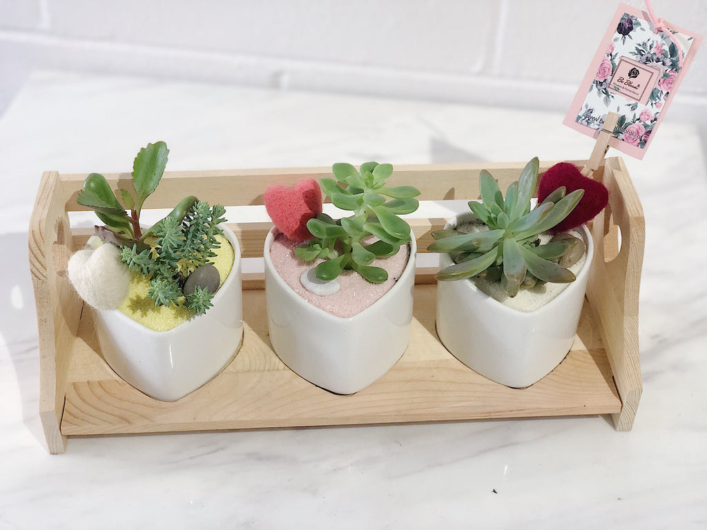 Succulent Set - Heart Shape Pots