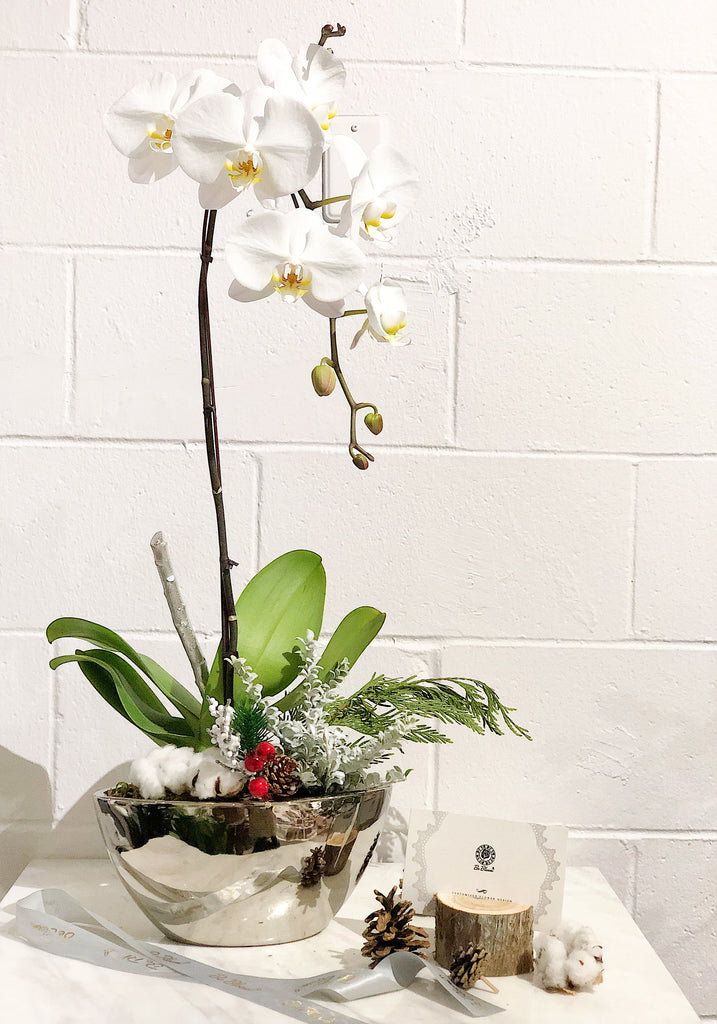 """Holiday"" Orchid - Silver Pot"