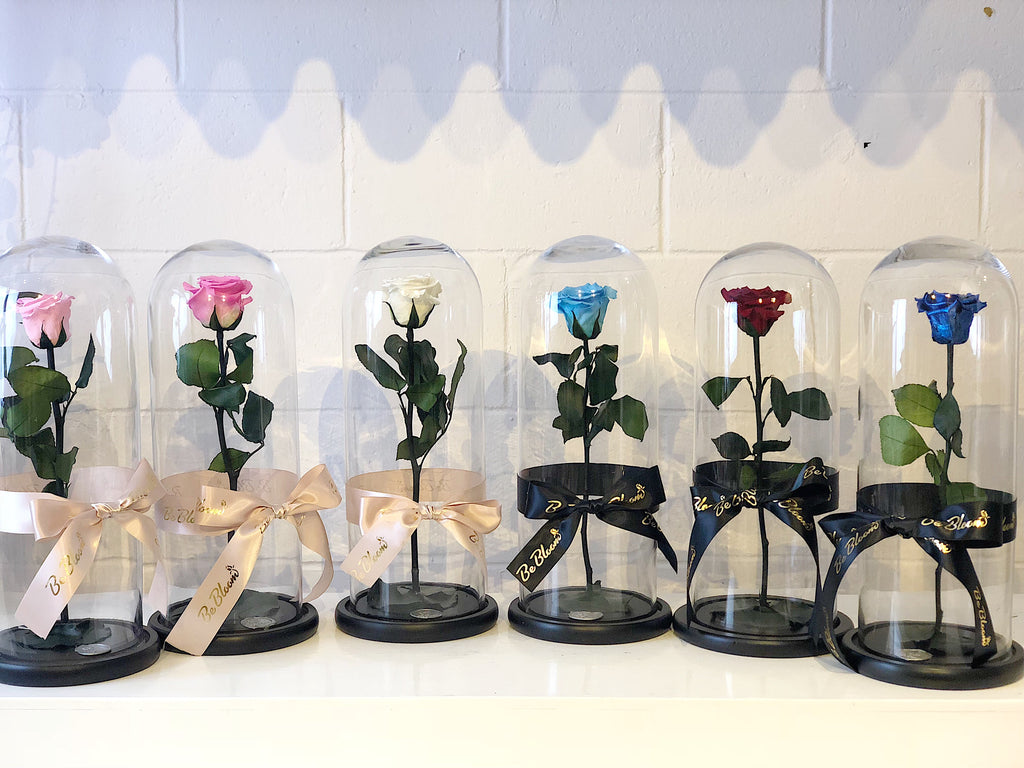 """Beauty & Beast"" Long stem Preserved Roses"