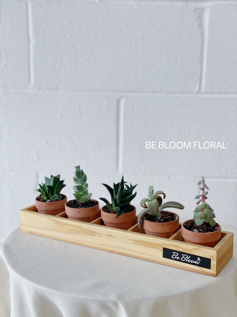 Succulents Set A