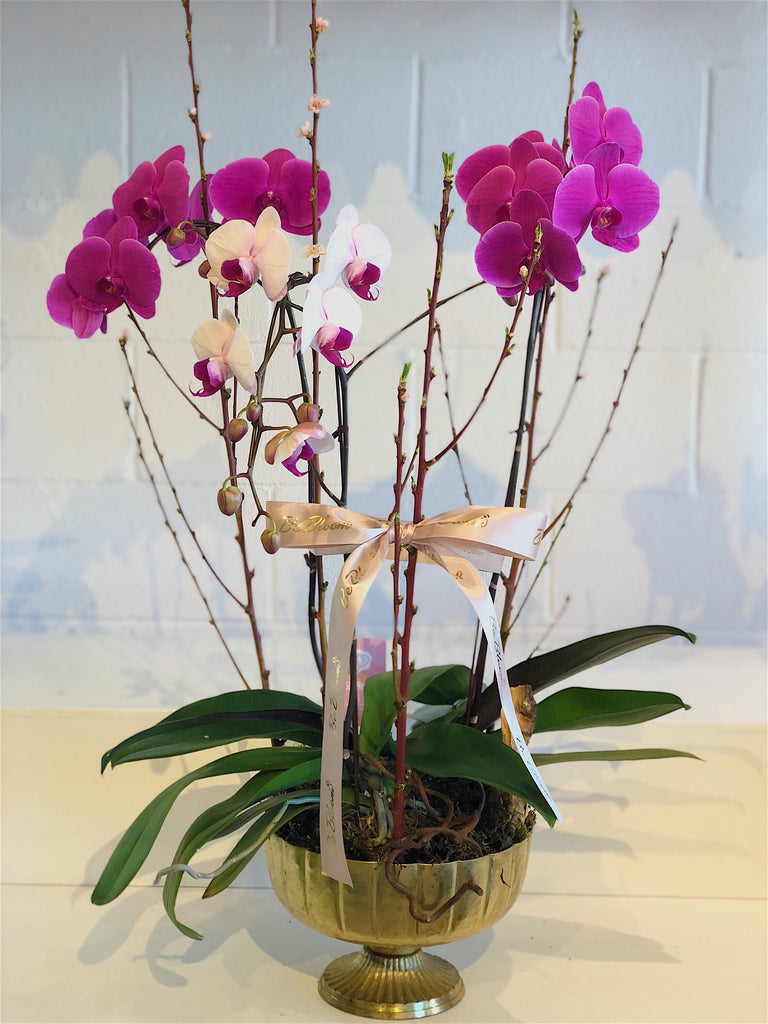 Congratulation Orchids- Gold Flower Pot