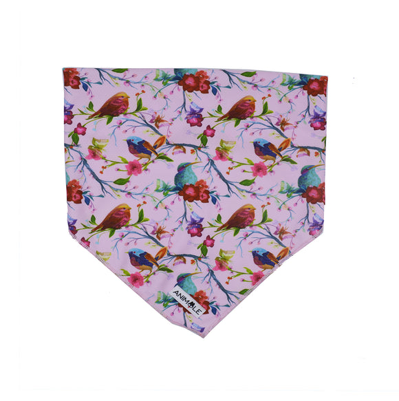 The Bird Of Paradise - Cooling Bandana