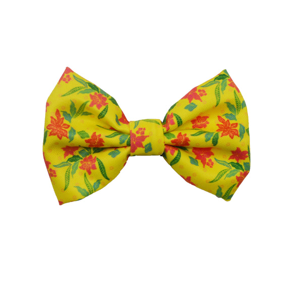 Tropical Sensation - Bow Tie