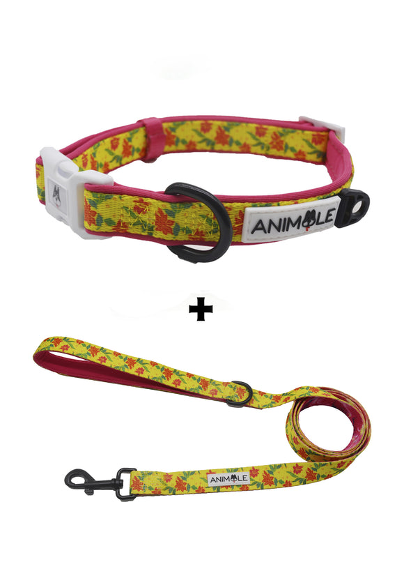 Tropical Sensation - Collar and Leash
