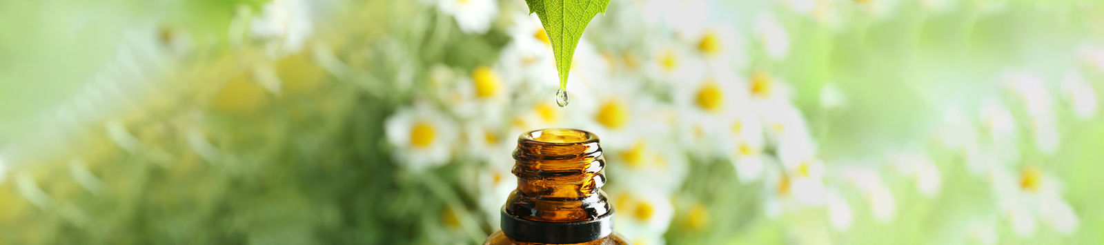 How Holistic Health Can Transform Your Life - Essential Oils