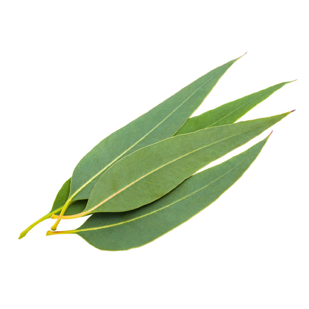 Eucalyptus Oil In Natural Hair