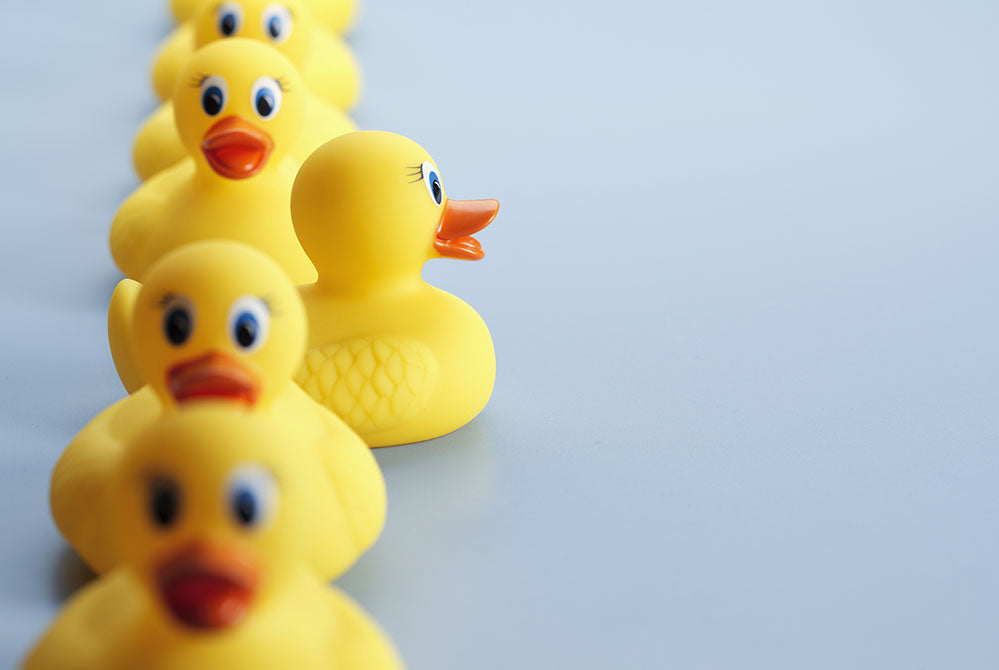 Get your ducks in a row for GCSE