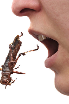 Eat Insects now!
