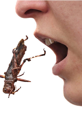 Eat Insects