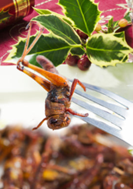 Eat insects at Xmas