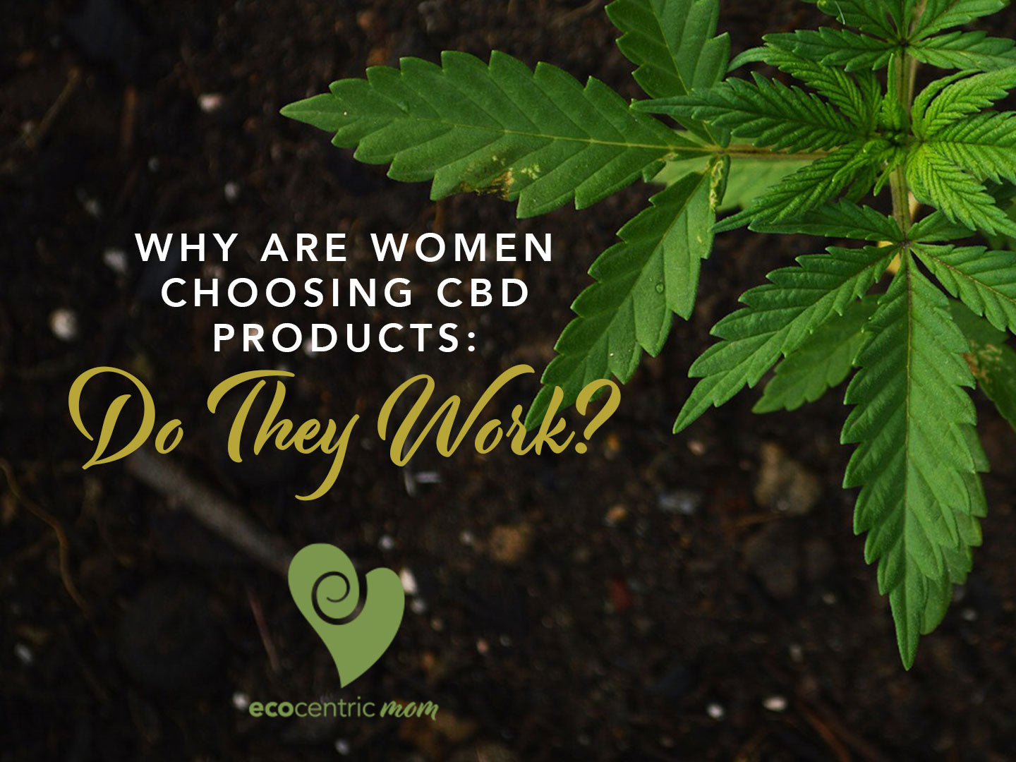 Why Are Women Choosing CBD Products: Do They Work?