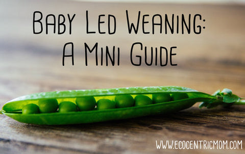Baby Led Weaning: A Mini Guide