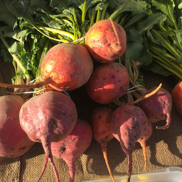 Mixed Beets (1 bunch)