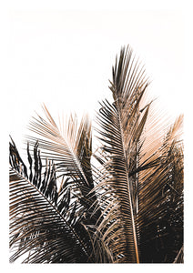 Palm Leaf - DAMA store