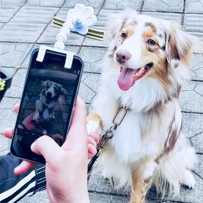 Inspire Uplift BriteDoggy Pet Selfie Stick White BriteDoggy Pet Selfie Stick