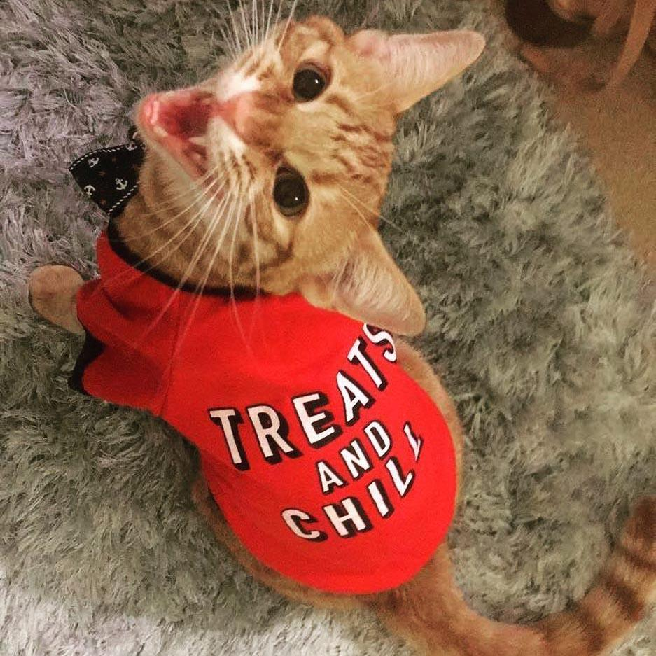 "Inspire Uplift Pet's Clothing ""Treats And Chill"" Dog & Cat T-Shirt"