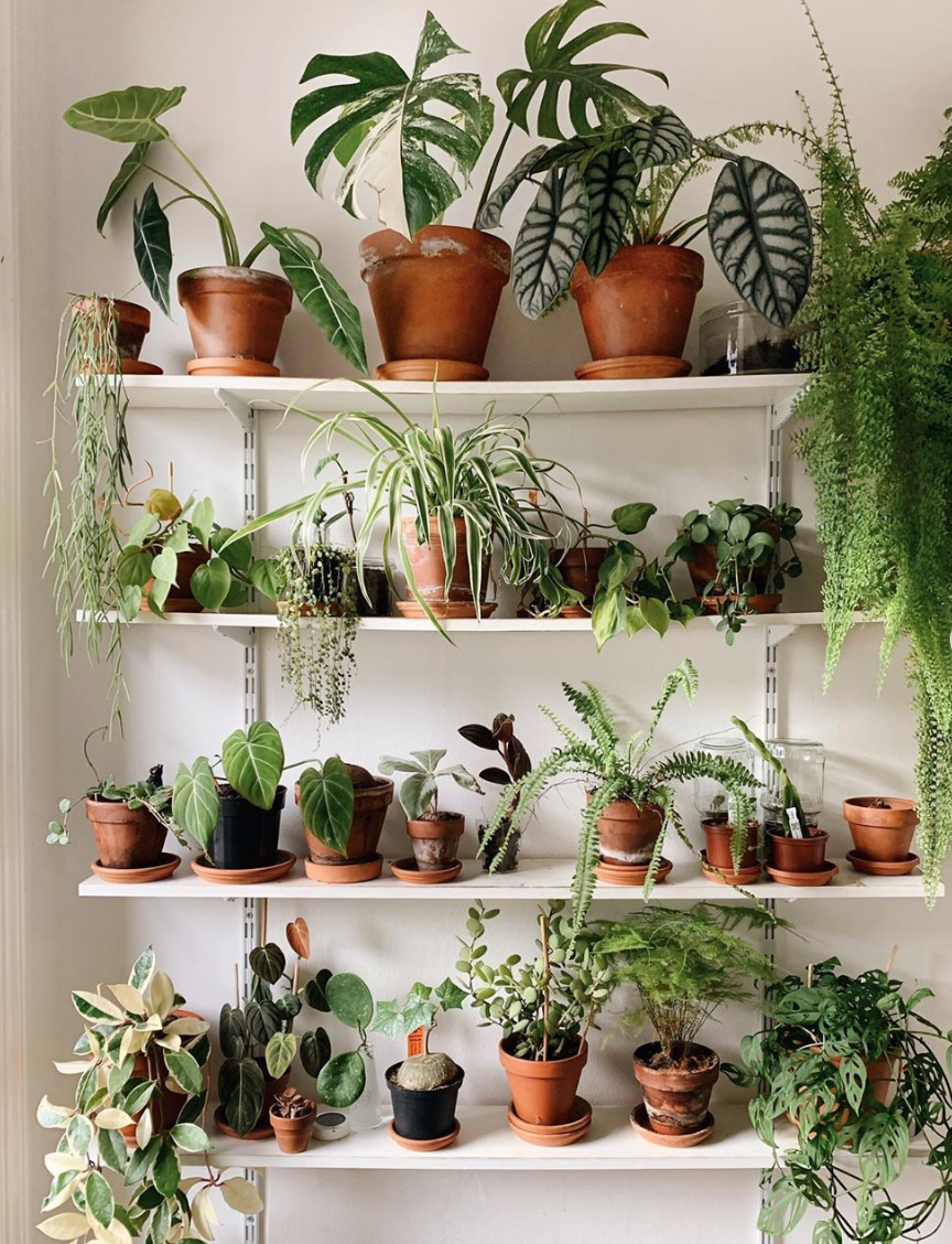 Our Guide to Houseplants