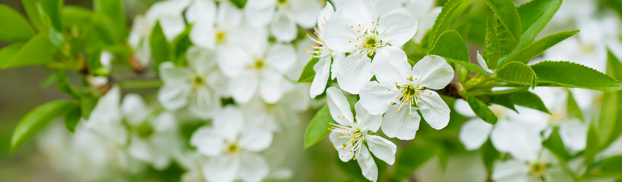 Scents for Springtime