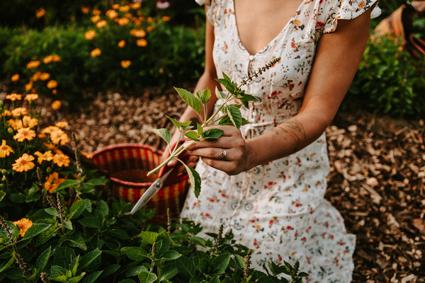 Tips For Perfect Herb Harvesting & Drying