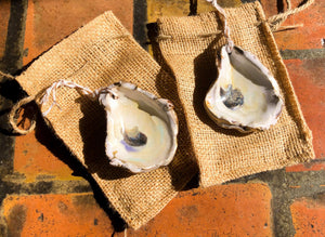 Ceramic Oyster Ornaments