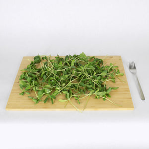 Sunflower Microgreens Yield